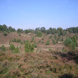 """Typische Heide im """"Vorbei-Reiten"""""""