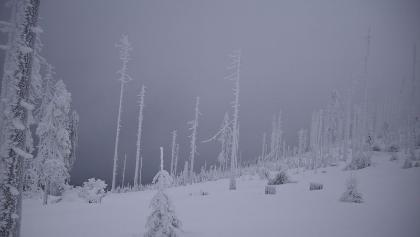 Winterlandschaft am Dreisessel