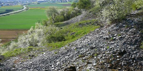 Kalkplatten zu sehen am Winzerweg