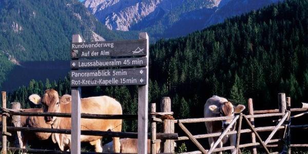 """Rundwanderweg """"Auf der Alm"""""""