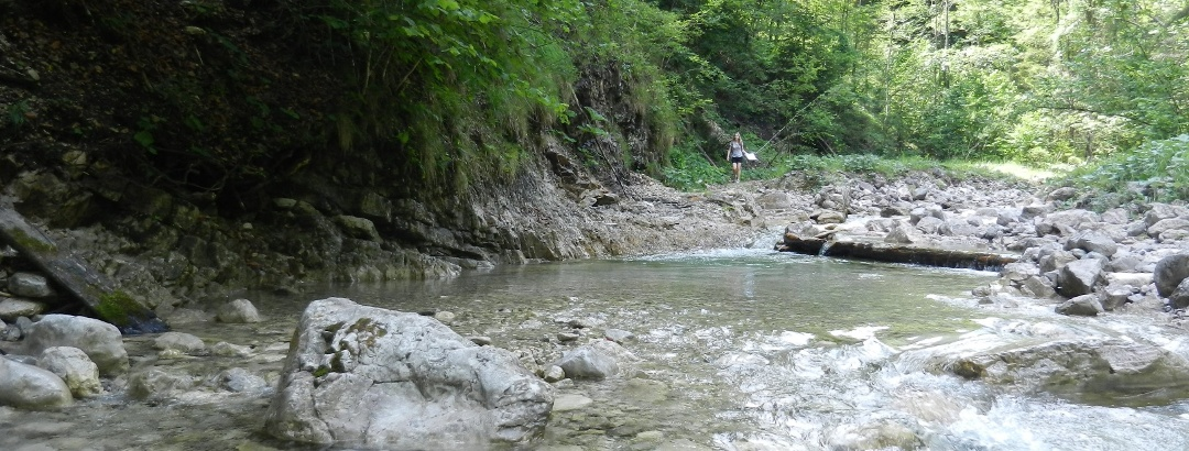 Ganz gemütlich begleitest du am ersten Wegstück den Großen Weißenbach