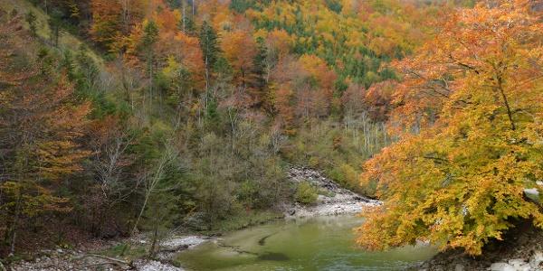 Herbstzauber am Großen Bach