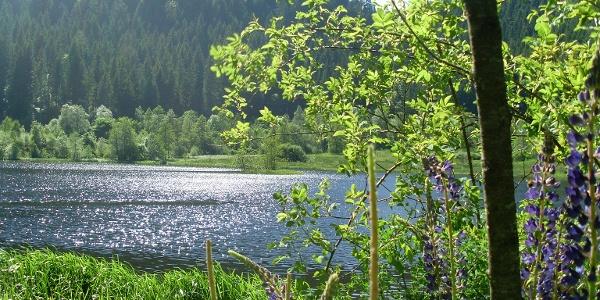Der Sankenbachsee