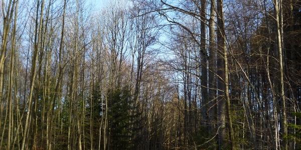 Breite Forstwege führen von der Lauterbacher Mühle in Richtung Ellmann.