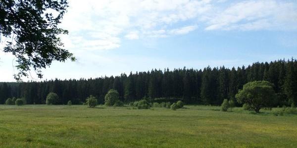 Blick ins Bodetal in Braunlage