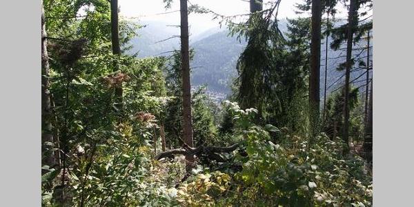 Die Aussicht von der Charlottenhöhe über die bewaldeten Kuppen des Schwarzwaldes.