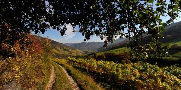 Panoramaweg Spitzer Graben im Herbst