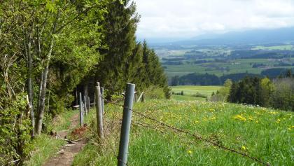 Im unteren Teil führt der Jägersteig panoramareich am Waldrand entlang.