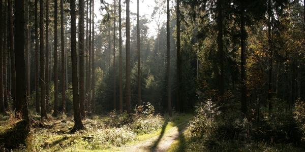 Bad Lippspringer Wald
