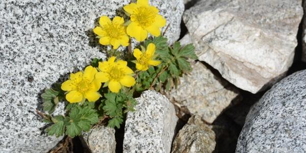 Mitten in der Steinwüste fasst die lebendige Natur wieder Fuß.