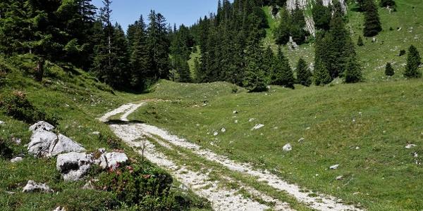 Nach dem Wald führt ein Forstweg auf die Almflächen