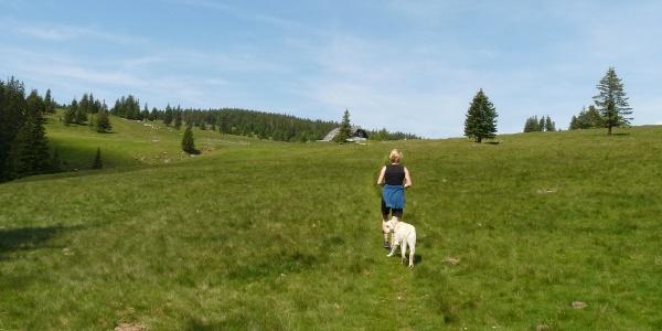 Die Brendlhütte bereits in Sichtweite, führt der Anstieg über weitläufige Almwiesen.