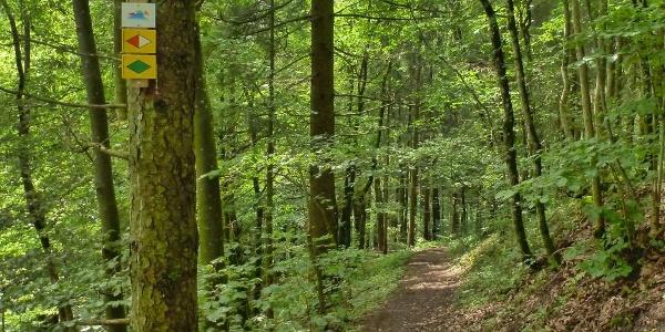 Waldweg am Hohenhewen
