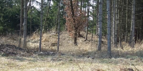 Von Bäumen umgeben sind einige der Grabhügel im Gelände schwer auszumachen.