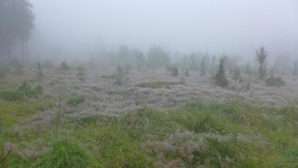 auch im Nebel hat diese Landschaft ihren Reiz