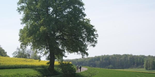 Vom Klosterparkplatz in Richtung Beuge