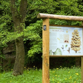Info-Tafel am Gingko-Baum im Arboretum Bad Driburg