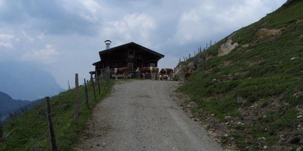 Eine Viehherde blockiert den Weg auf der Naringalm.