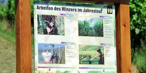 Informationstafeln erleutern uns die Arbeit am Weinberg.