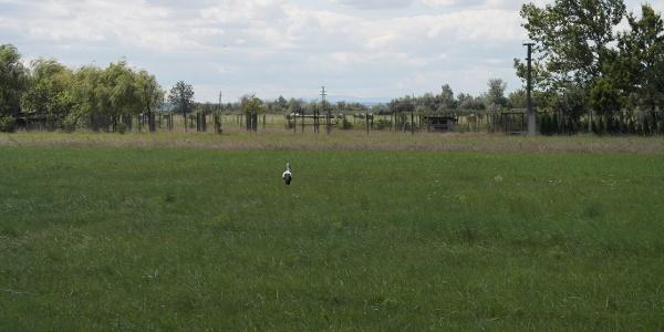 ein Storch in der Weite der Landschaft