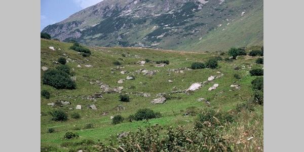 Bergweiden