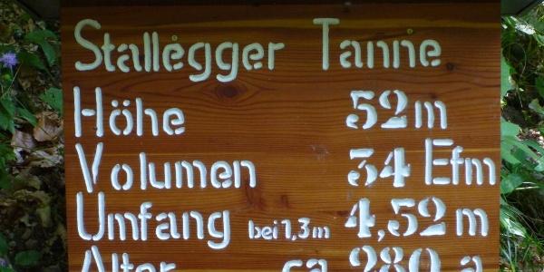 Stallegger Tanne