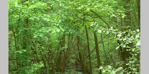 Die Landschaft nördlich von Offenbach ist von zahlreichen Bächen wie dem Floßbach durchzogen.