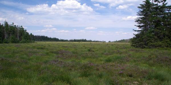 Das Große Torfmoor mit seiner urwüchsigen Landschaft ist der Höhepunkt unserer Tour.