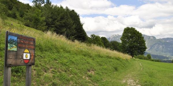 Kiefernspaziergang