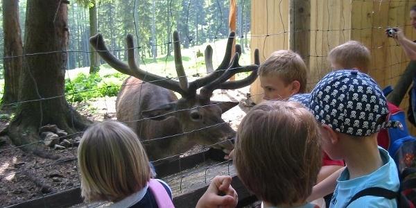 Naturpark Hohe Wand Tiergehege