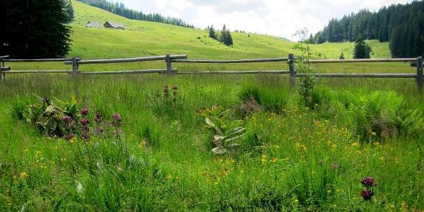 Ebenforstalm im Reichraminger Hintergebirge, Nationalpark Kalkalpen