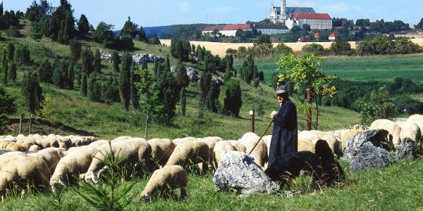 Schäfer in der Zwing mit Blick auf die Abtei Neresheim