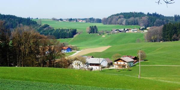 Wichenham - Daxjuden