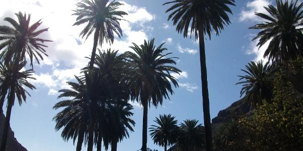 Palmenaufstieg nach el Guro