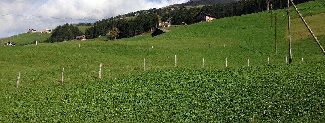 Blick über die grünen Wisen auf der Fuhr