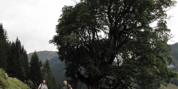 Unterhalb der Moosalm - Adamhütte