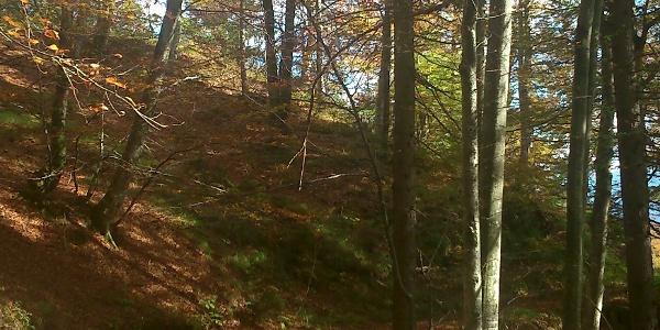 Nordic Walking im herbstlichen Dellach