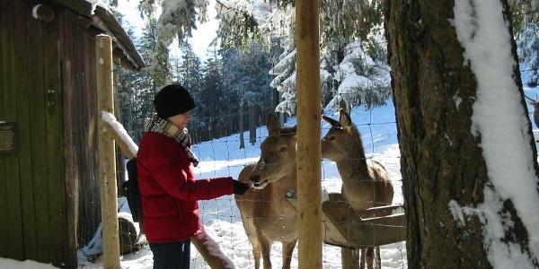 Winter Naturpark Hohe Wand
