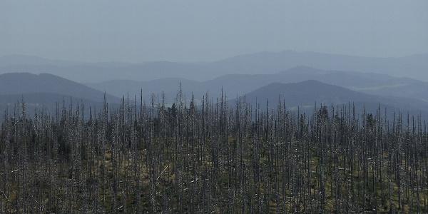 Landschaft rund um den Lusen im Nationalpark Bayerischer Wald