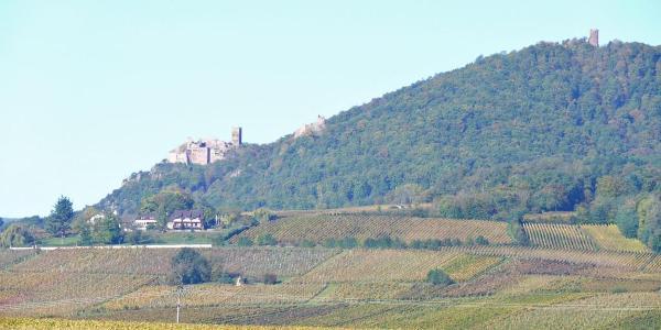 Die drei Burgen von Ribeauvillé