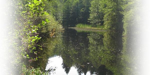Biotop im Eyachtal (Nähe Schlangenwiese)