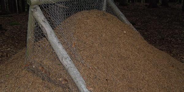Immer wieder sind am Wegrand riesige Ameisenhaufen zu bewundern.