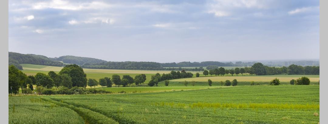 Naturlandschaft im Münsterland