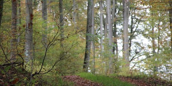 Wälder um den Blasenberg