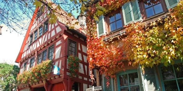 Herbstliches Besigheim