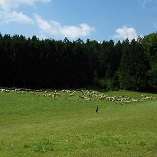 Am Schellenberg