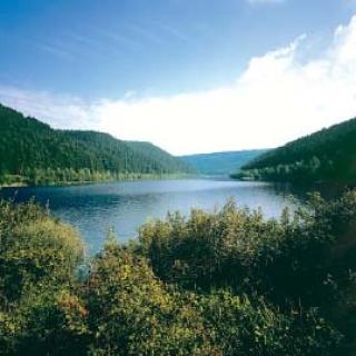 Der Langenwaldsee