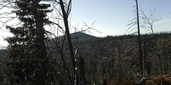 Lusen vom Steinfleckberg