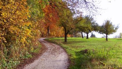Herbstlicher Waldrand am Striegel.
