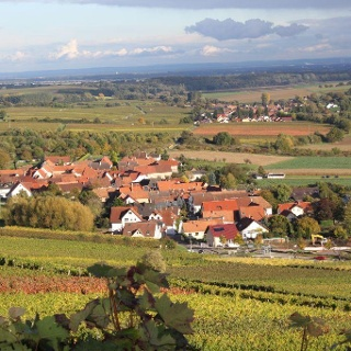 Blick über Pleisweiler-Oberhofen